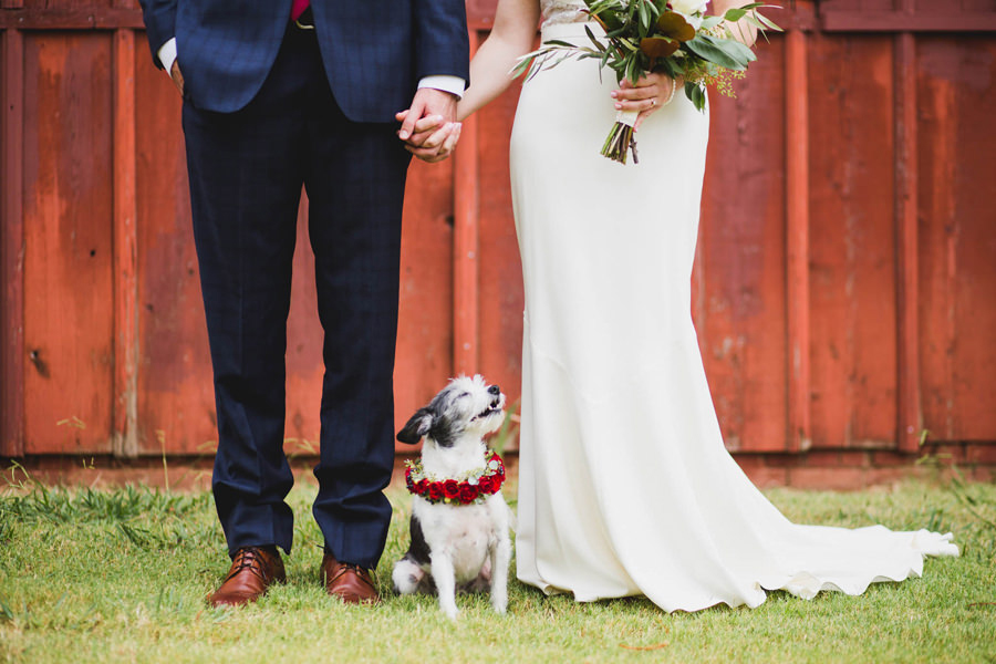12-harn-homestead-okc-wedding-photographer-bride-groom-dog-los-angeles-barn
